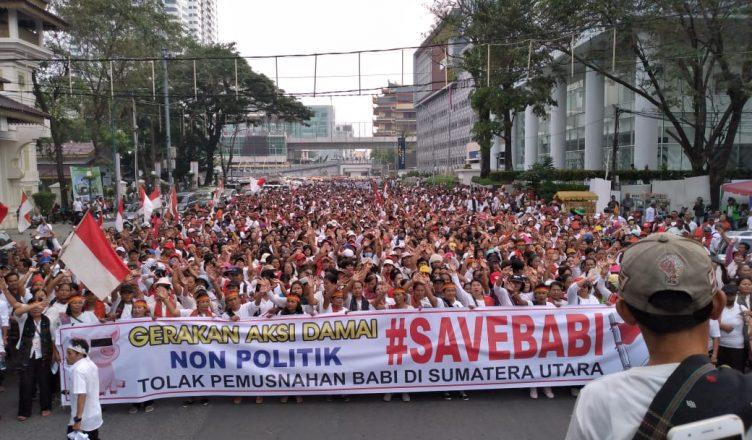 """Gerakan #SAVEBABI untuk """"Kedaulatan"""" Babi"""
